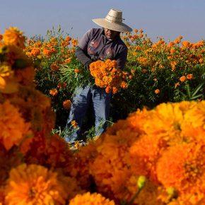 Que regresen los amaneceres naranjas
